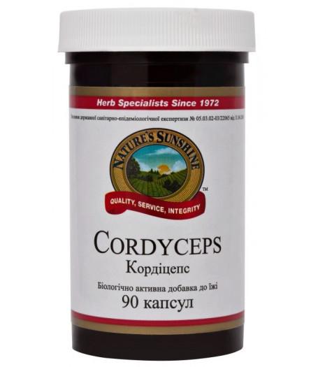 Кордицепс - Cordyceps