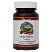Эхинацея - Echinacea