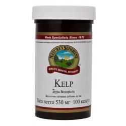 Келп - Бурая водоросль - Йод