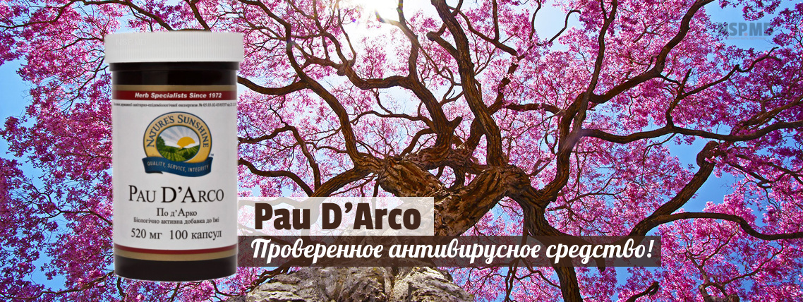 По Дарко - Кора Муравьиного дерева