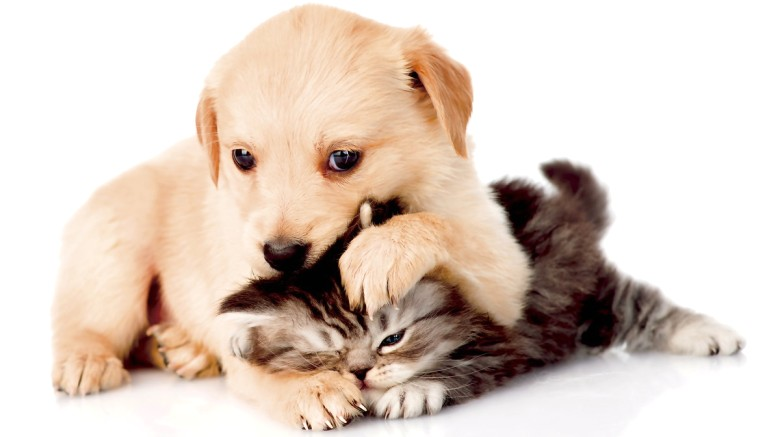 NSP для домашних животных