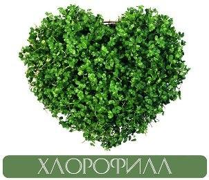 Хлорофилл в Молдове NSP