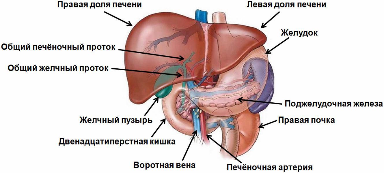 лецитин от холестерина