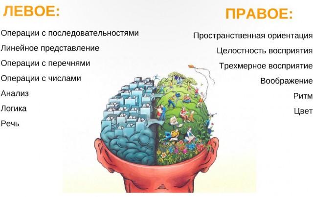 Как работает мозг?