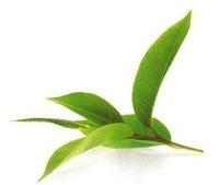 Зеленый чай напиток Молдова купить