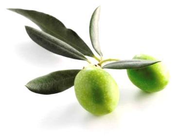 Листья оливы противовирусное средство NSP Молдова