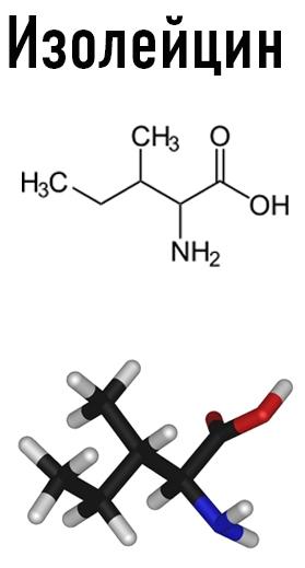 Для жизнедеятельности организма необходимо 22 аминокислоты